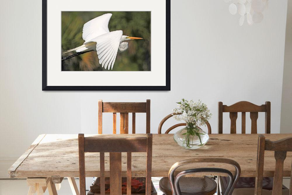 """Great Egret&quot  (2012) by shelshots"
