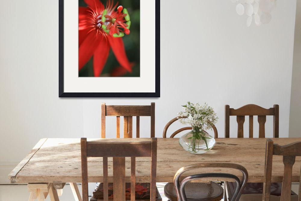 """Passiflora vitifolia Scarlet Red Passion Flower&quot  (2011) by sharonmau"
