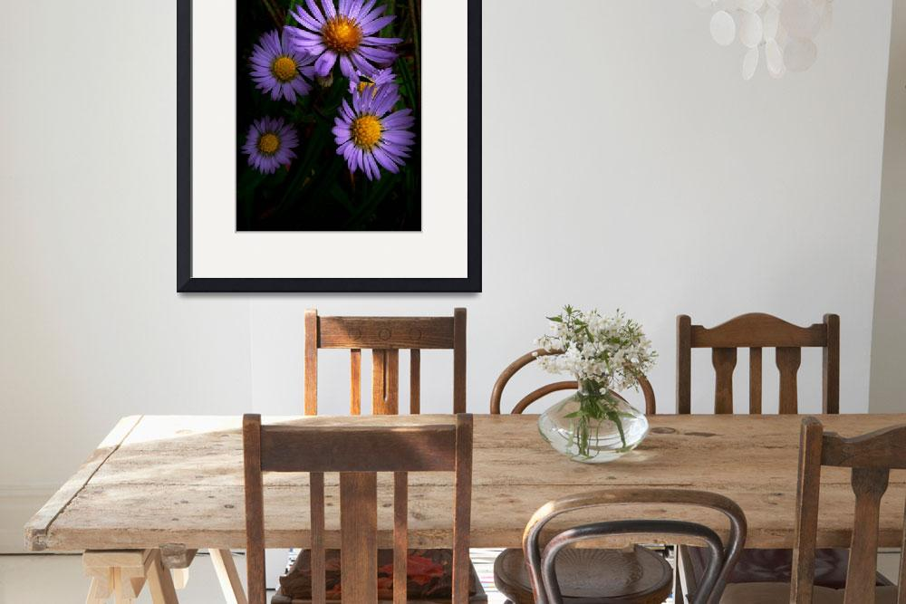 """Wild Fall Asters&quot  (2011) by bavosiphotoart"