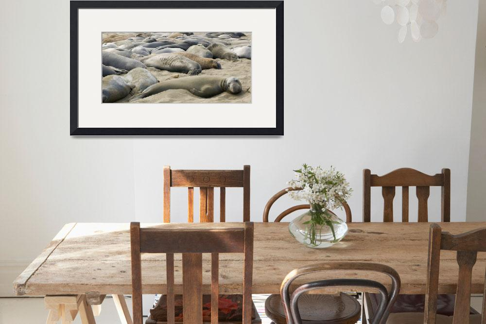 """Elephant Seals Sun bathing&quot  by eyalna"