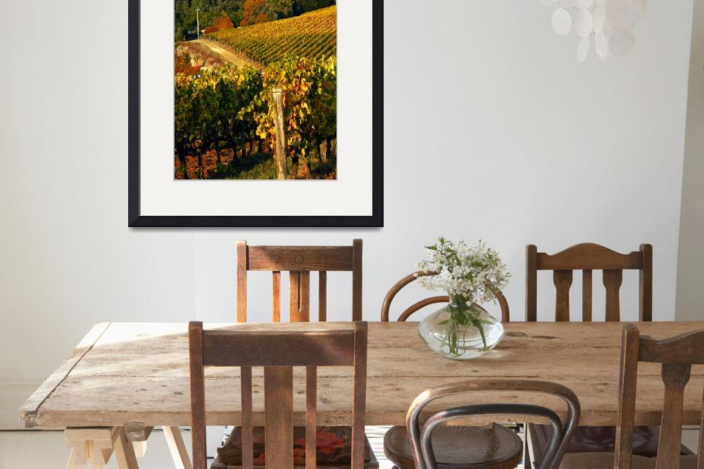 """Tuscan Vineyards&quot  (2011) by raetucker"