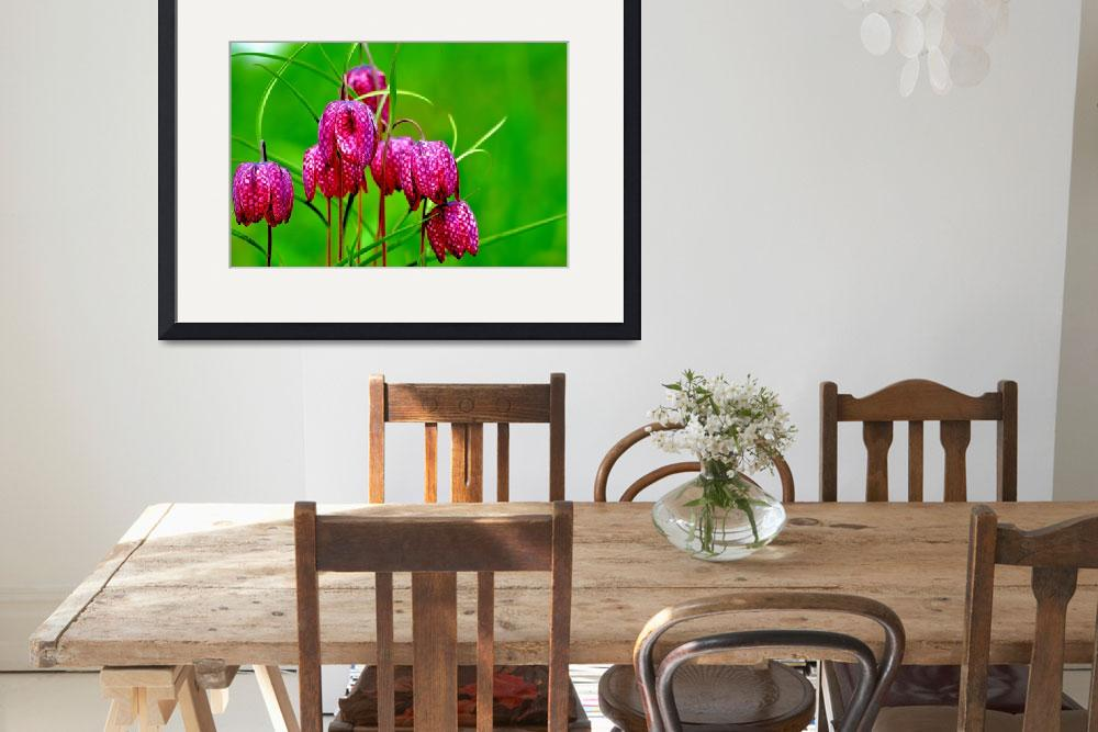 """Pink Fritillaries&quot  (2014) by joanhan"