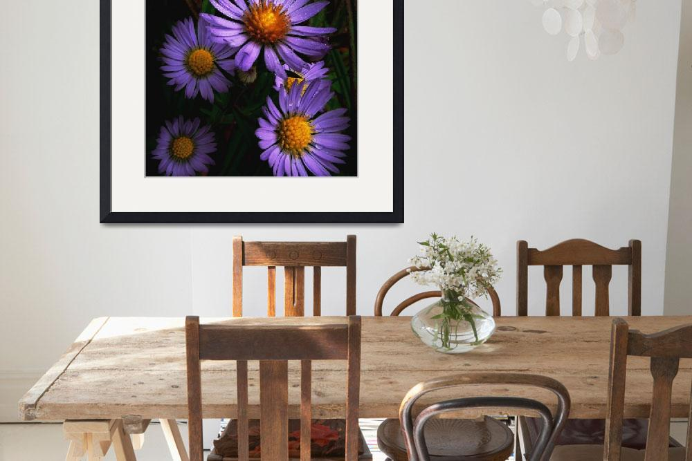"""Wild Asters&quot  (2013) by bavosiphotoart"