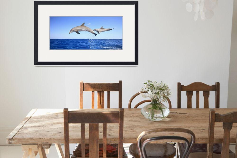 """Roatan, Bay Islands, Honduras Bottlenose Dolphins&quot  by DesignPics"