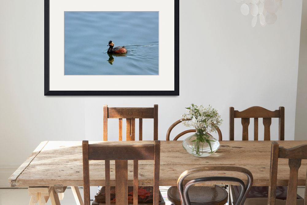 """Eared Grebe&quot  (2012) by rayjacque"