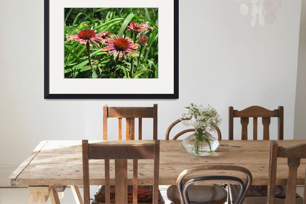 """Purple Cone Flower - Echinacea purpurea&quot  by tjdesignstuido"