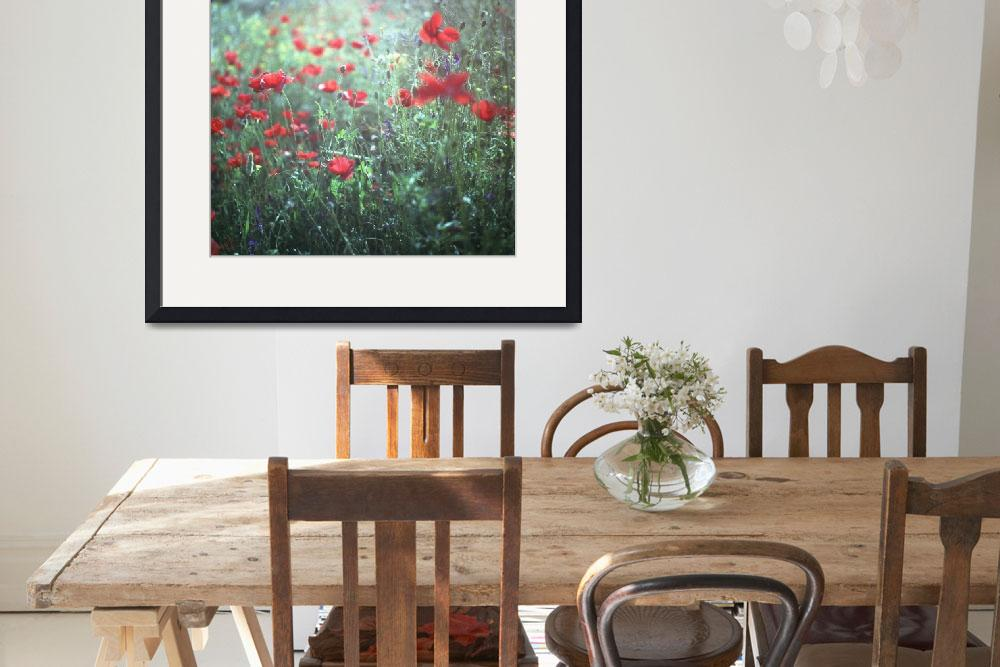 """Red wild poppy flowers on green Hasselblad square&quot  (2009) by edwardolive"