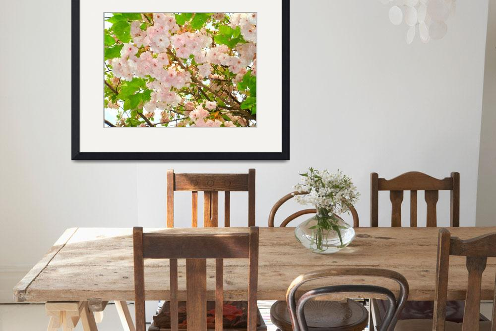 """Blooming cherry blossom 1&quot  (2013) by lanjee"
