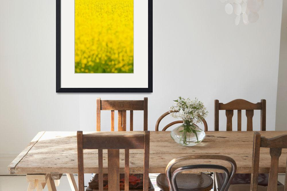 """Field of Yellow&quot  (2011) by redfibres"