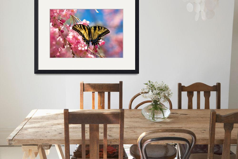 """swallowtail butterfly and cherry blossoms&quot  by tricia"
