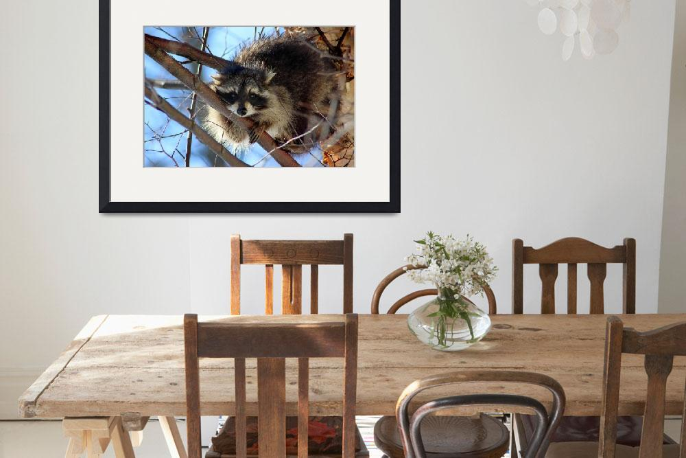 """Young Raccoon in a Birch Tree&quot  (2015) by KsWorldArt"