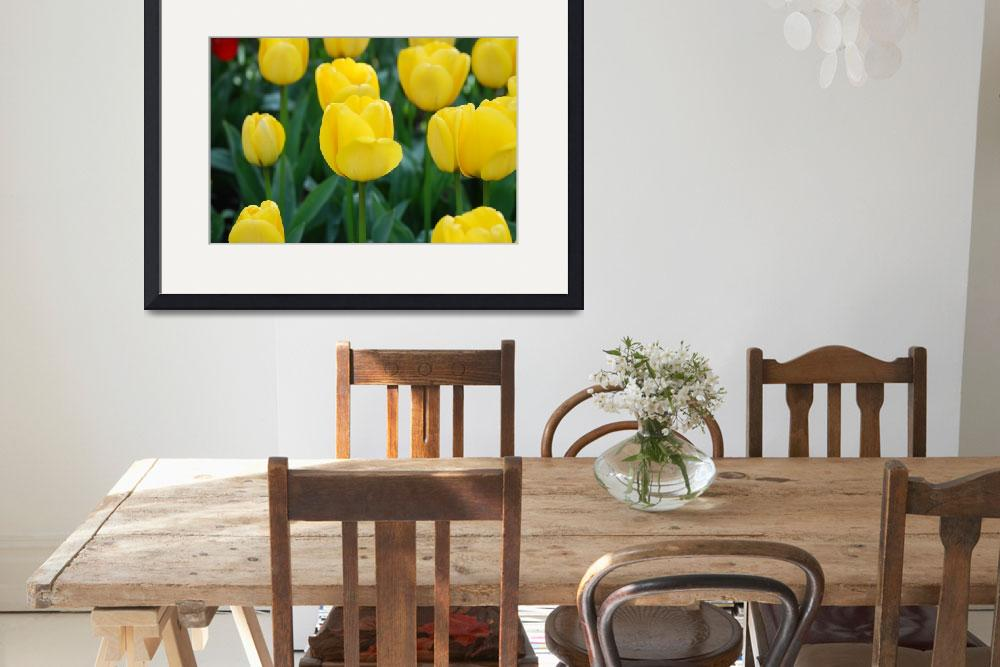 """Yellow Tulips&quot  (2010) by Arlene010"