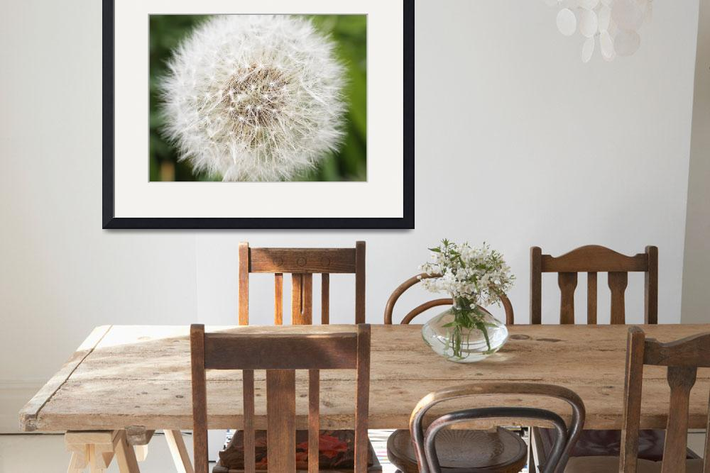 """dandelion seed head&quot  (2008) by nathangriffith"