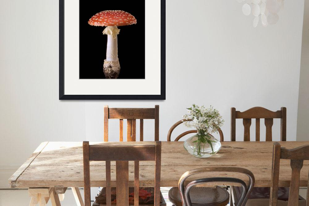 """Amanita muscaria&quot  (2010) by zensphoto"