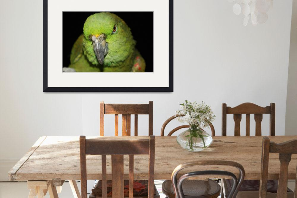 """Yellow-Naped Amazon Parrot&quot  (2010) by AlexButler"