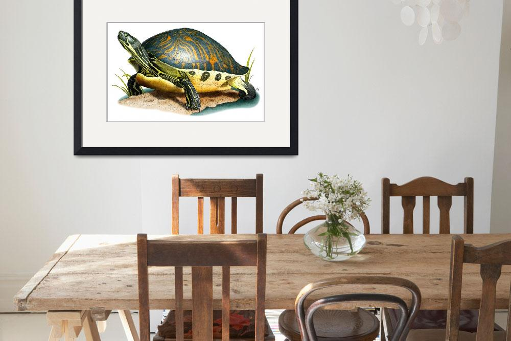 """Florida Cooter&quot  (2009) by inkart"