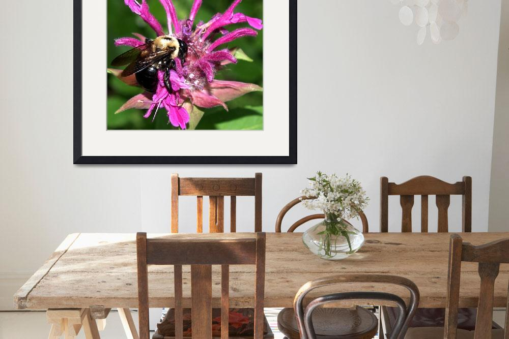 """Bee On Beebalm Photography by Ginette Callaway&quot  (2008) by GinetteCallaway"