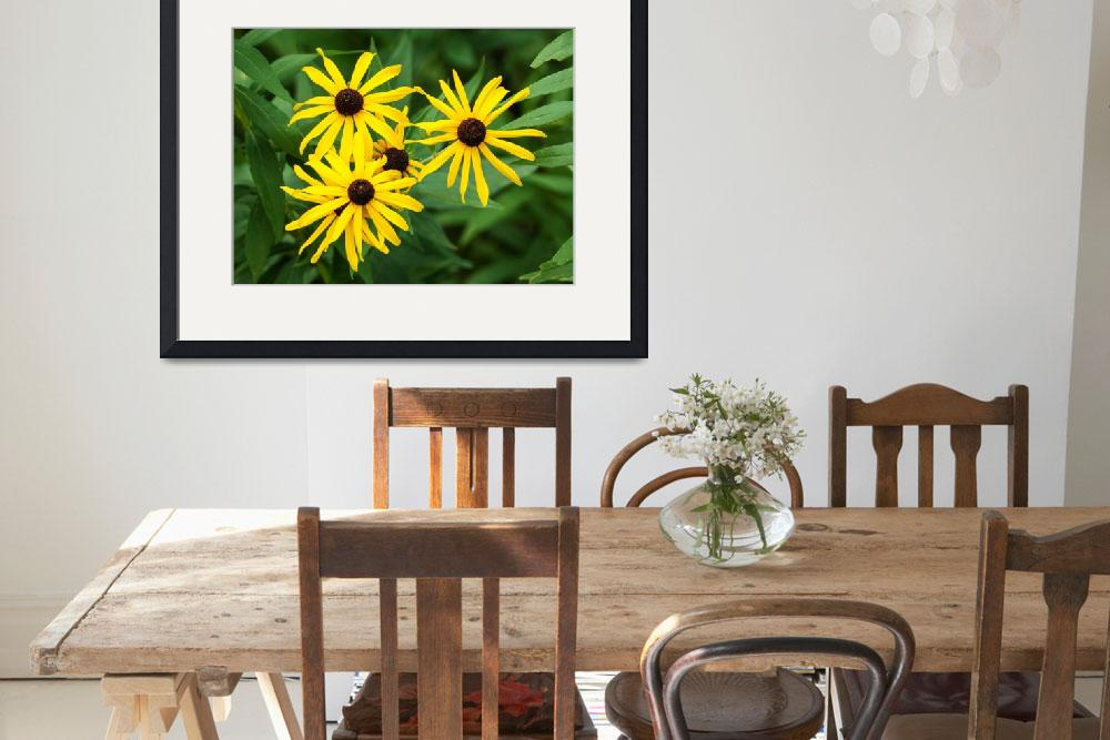 """Black Eyed Susan&quot  (2012) by StonePhotos"