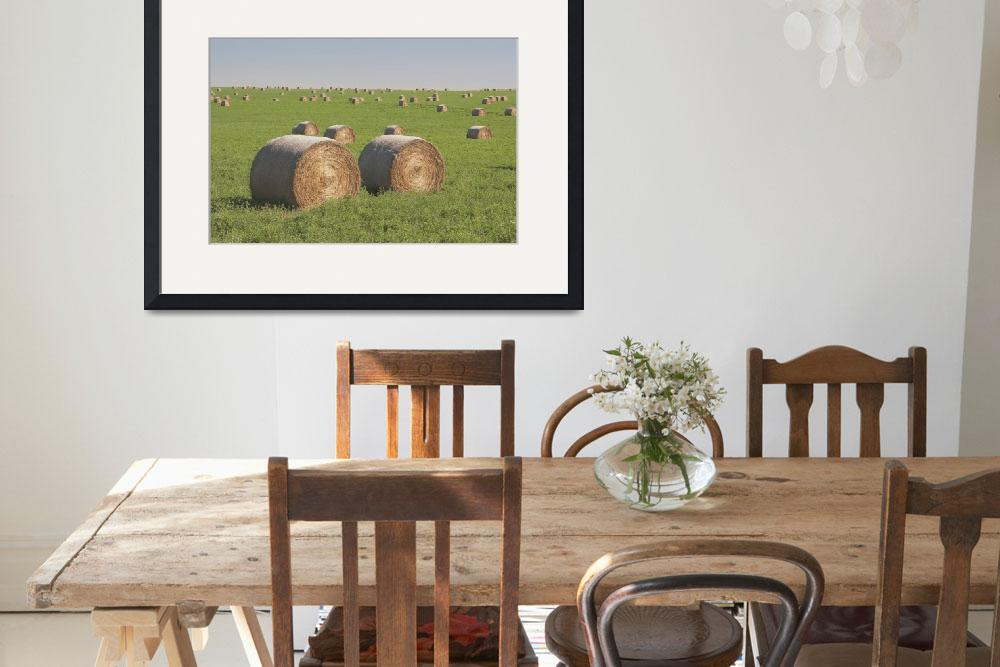 """Hay Bales In A Green Alfalfa Field&quot  by DesignPics"