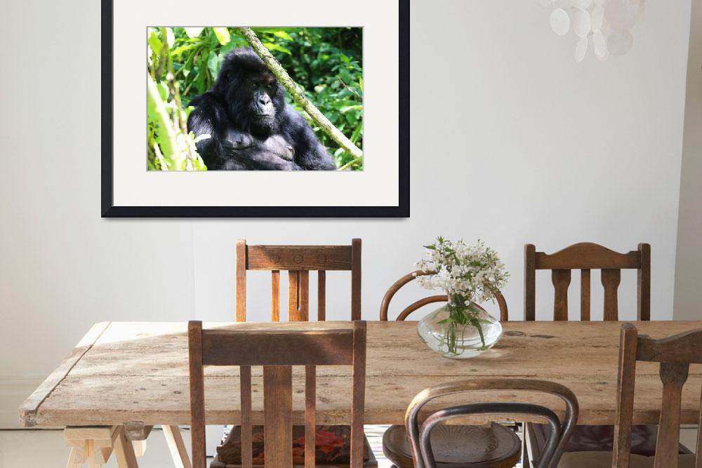 """Pensive Gorilla&quot  by Sammons-Photography"