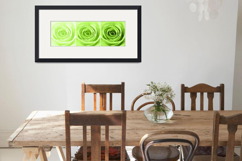 """Lime Green Rose with Water Droplets Triptych&quot  (2012) by NatalieKinnear"