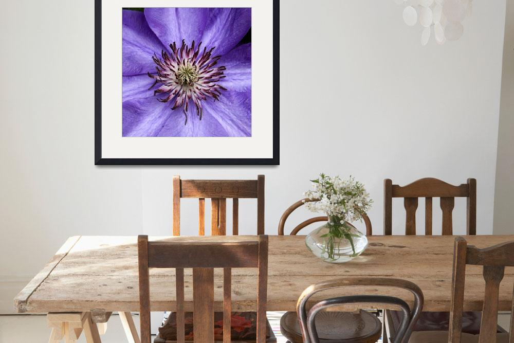 """Clematis Radiance&quot  by leinesdesign"