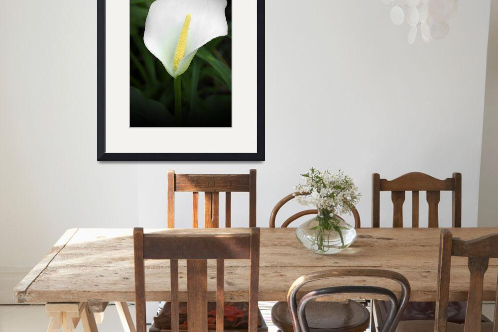 """The Arum Lily&quot  by zoegarner"