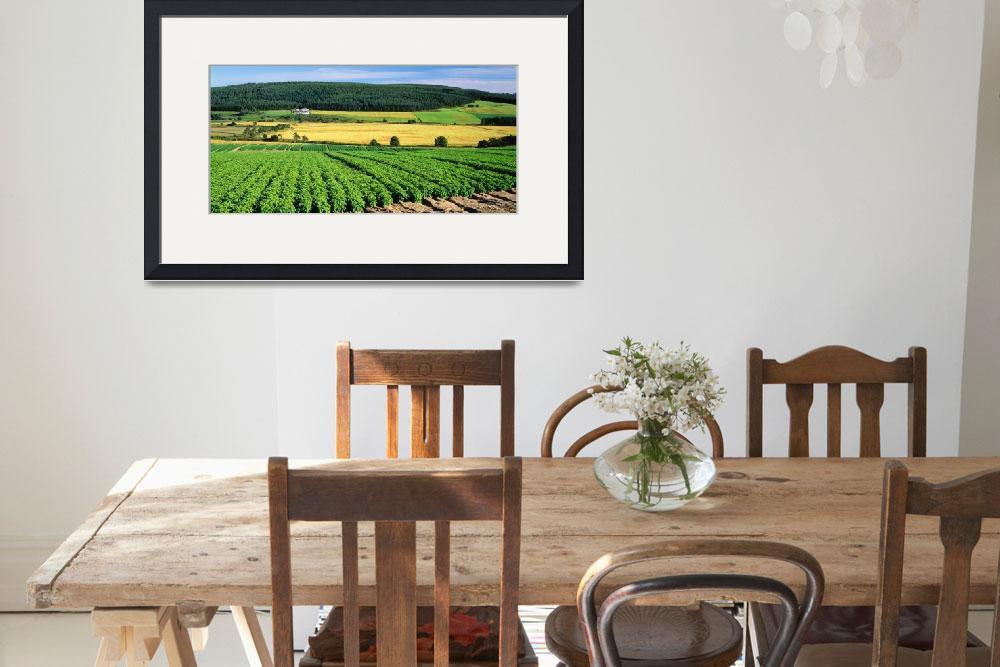 """Potato Field Munlochy Bay Black Isle Scotland&quot  by Panoramic_Images"
