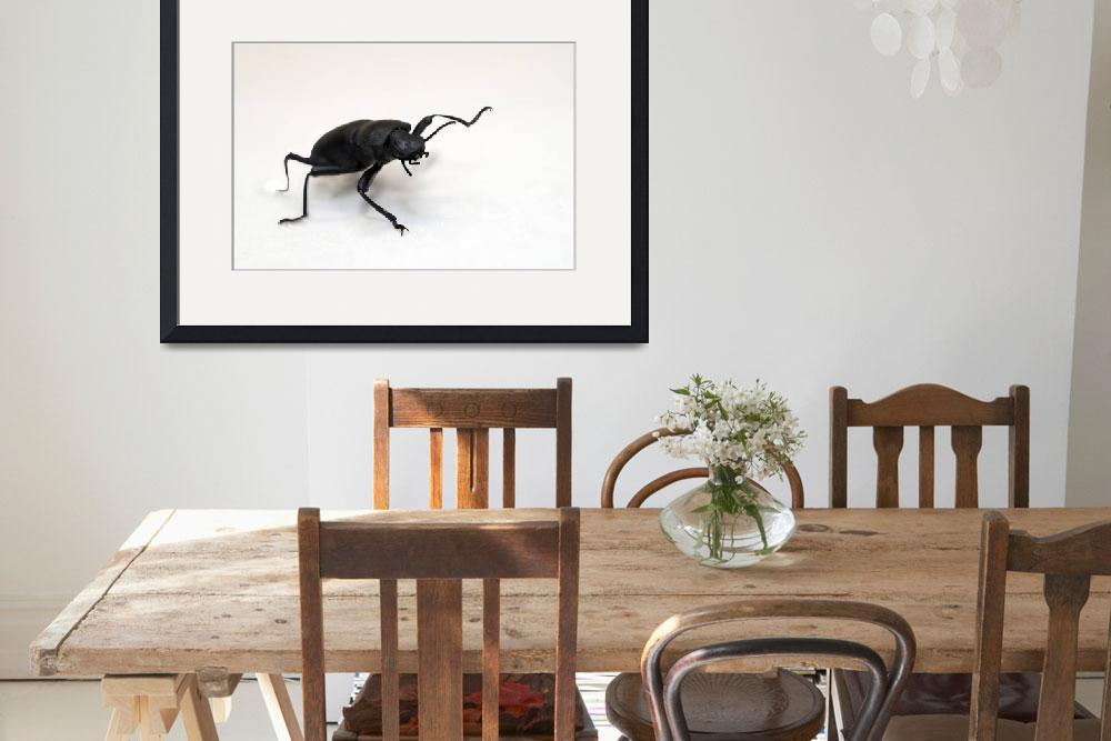"""Big Black Beetle&quot  (2011) by LauraM"