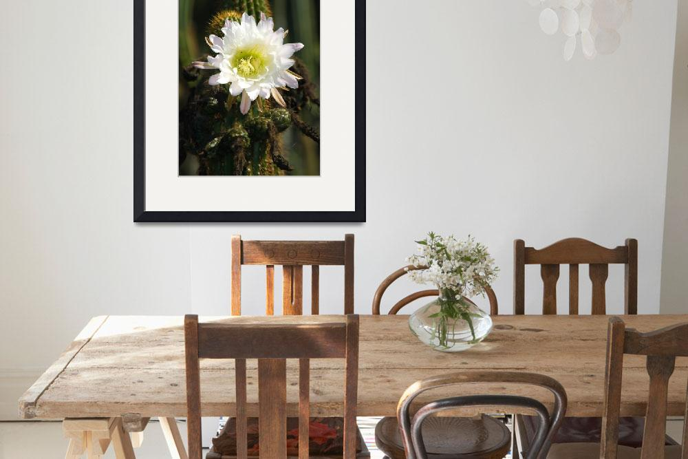 """White Cactus flower bloom&quot  by eyalna"