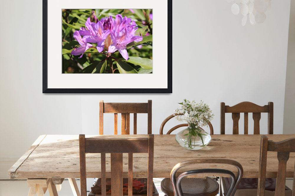 """Purple Rhododendron&quot  (2014) by Groecar"
