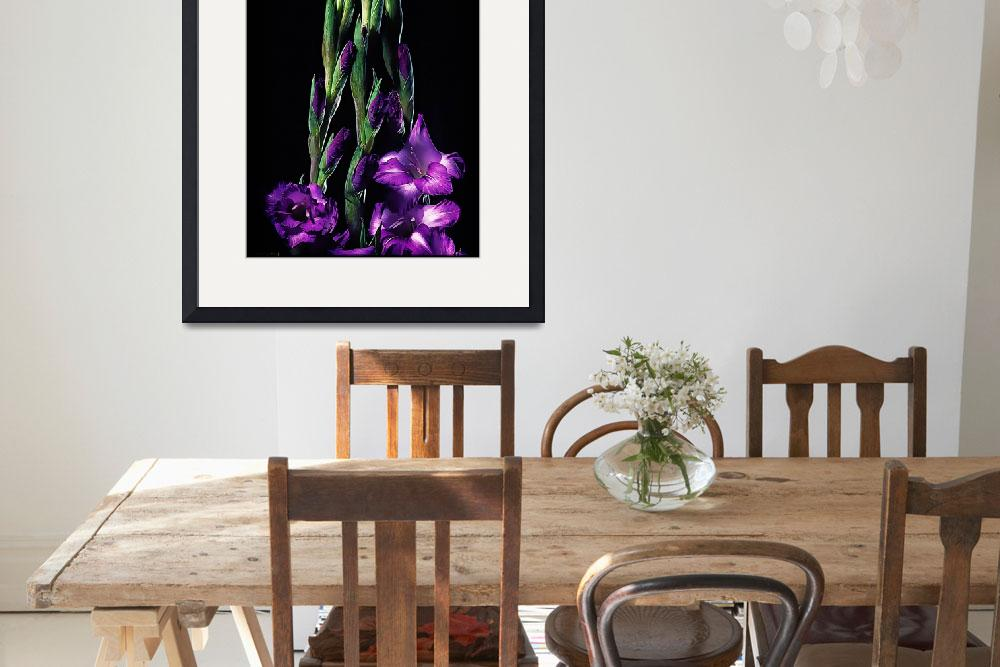 """Gladiolas Illustrated&quot  (2009) by BotanicaPhotographicus"