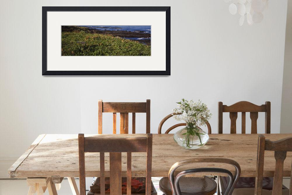 """High angle view of flowers growing on a headland&quot  by Panoramic_Images"