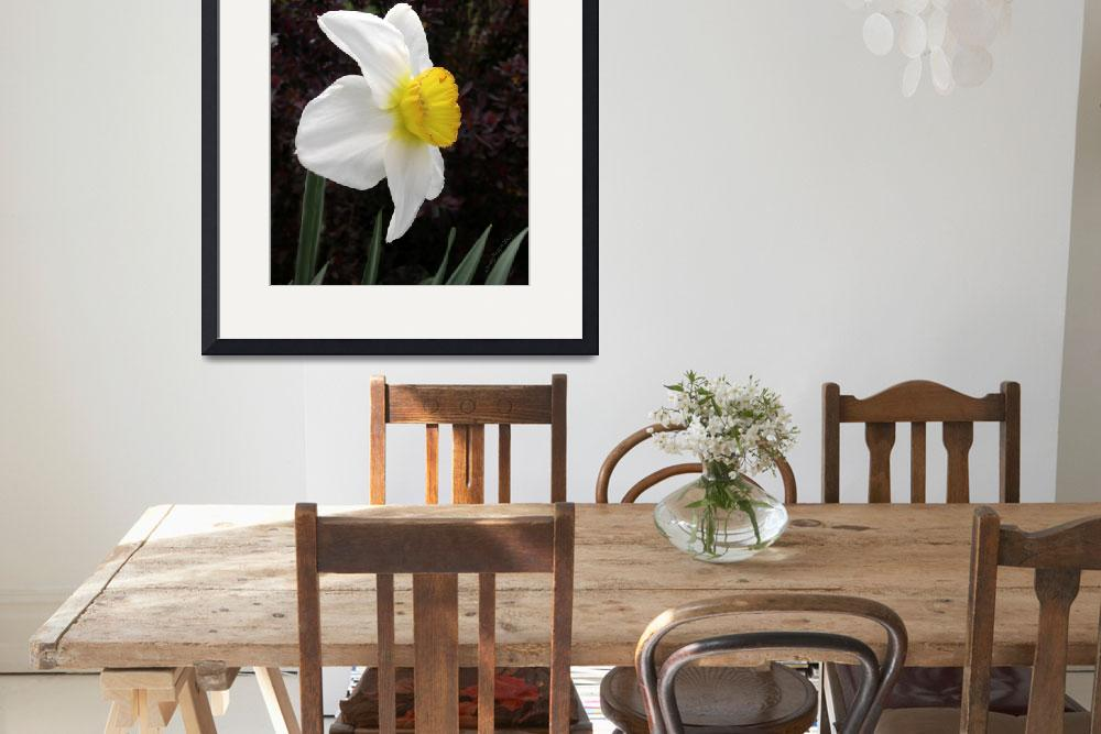 """Daffodil Flower Record Photograph&quot  (2007) by DogsandFlowers"