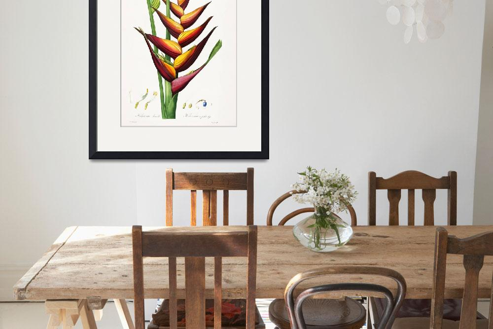 """Heliconia Bloom, Pierre-Joseph Redouté&quot  by lookbackart"