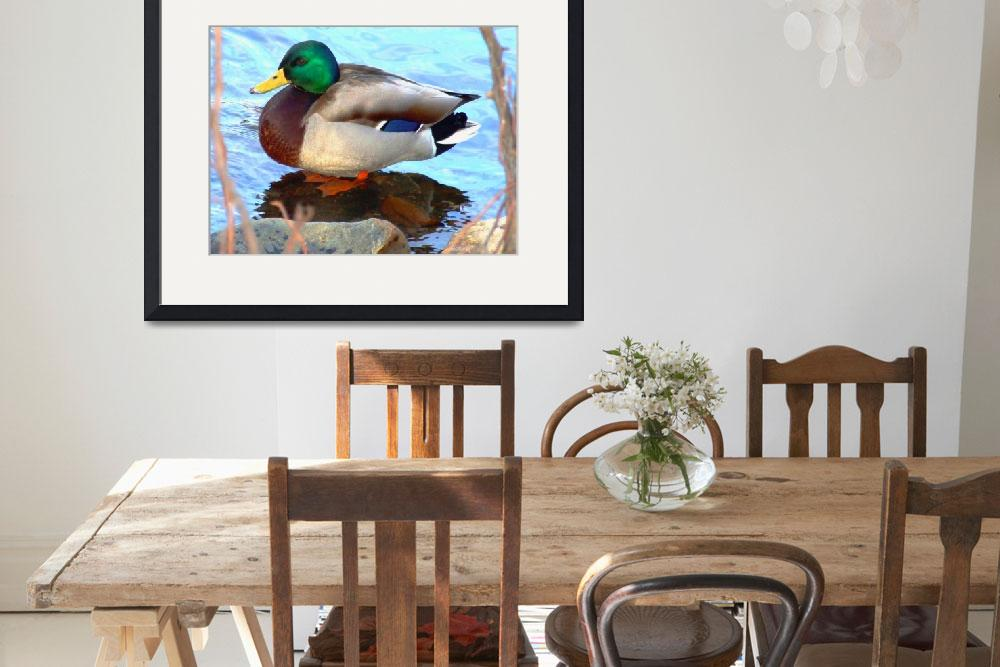 """Male Mallard&quot  (2008) by bavosiphotoart"