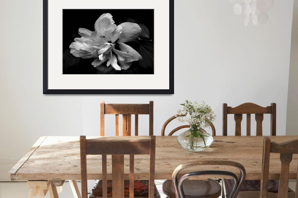 """Rose of Sharon ll   B&W&quot  (2012) by bavosiphotoart"