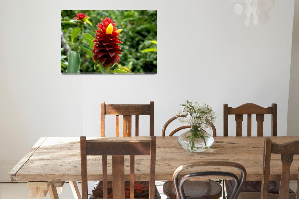 """Cayman Islands Plant Life : Red Tower Spiral Ginge&quot  by RonScott"
