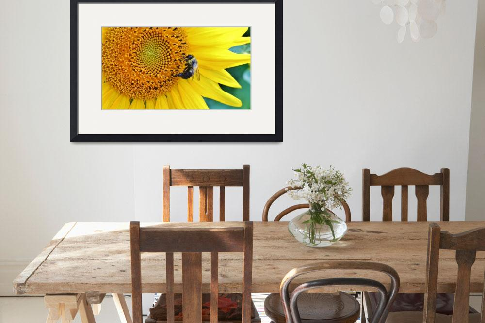 """Bee on Sunflower&quot  (2014) by MindfulPhotog"