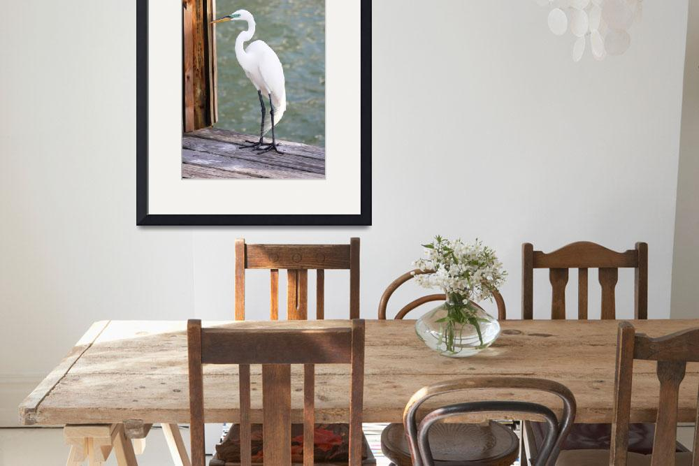 """Pretty Great Egret&quot  by Groecar"