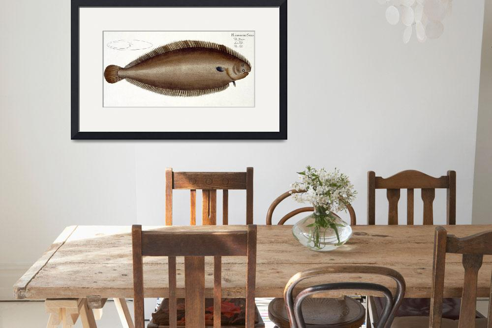 """Dover Sole (Solea Solaea)&quot  by fineartmasters"