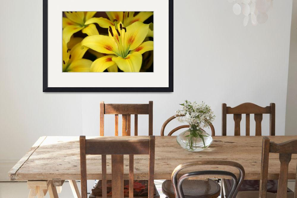 """Yellow Lilies&quot  by yellow"
