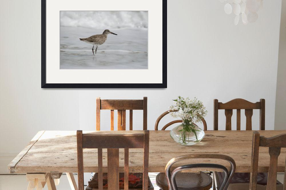 """Willet&quot  (2012) by WildAboutNaturePhotography"