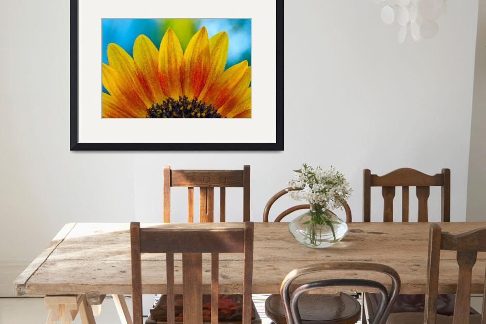 """Sunflower&quot  (2011) by MarinaCastillo"