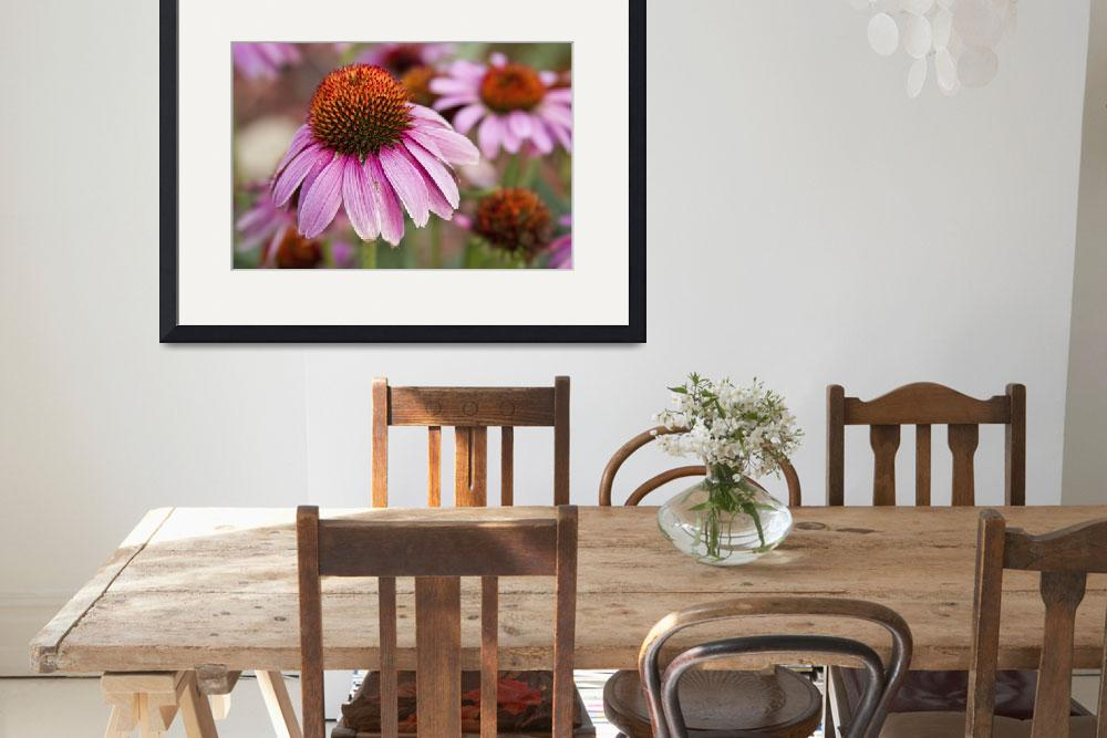 """Echinacea Purple Coneflowers&quot  (2012) by lightningman"