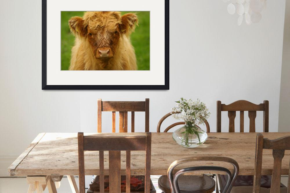 """Highland calf&quot  (2009) by mellting"
