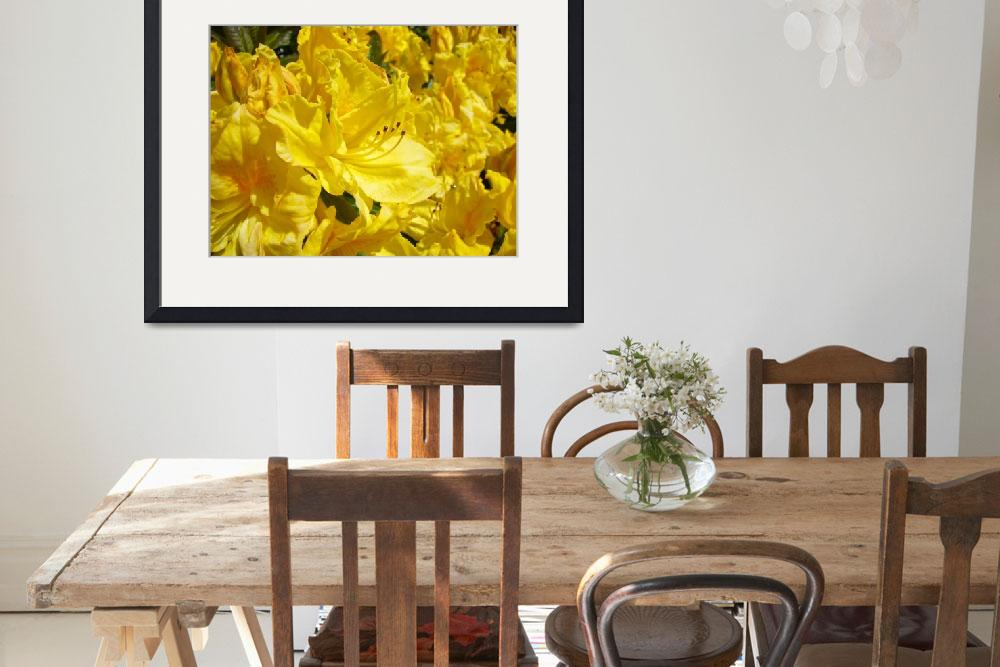 """Rhododendrons Flowers art prints Yellow Rhodies&quot  (2010) by BasleeTroutman"