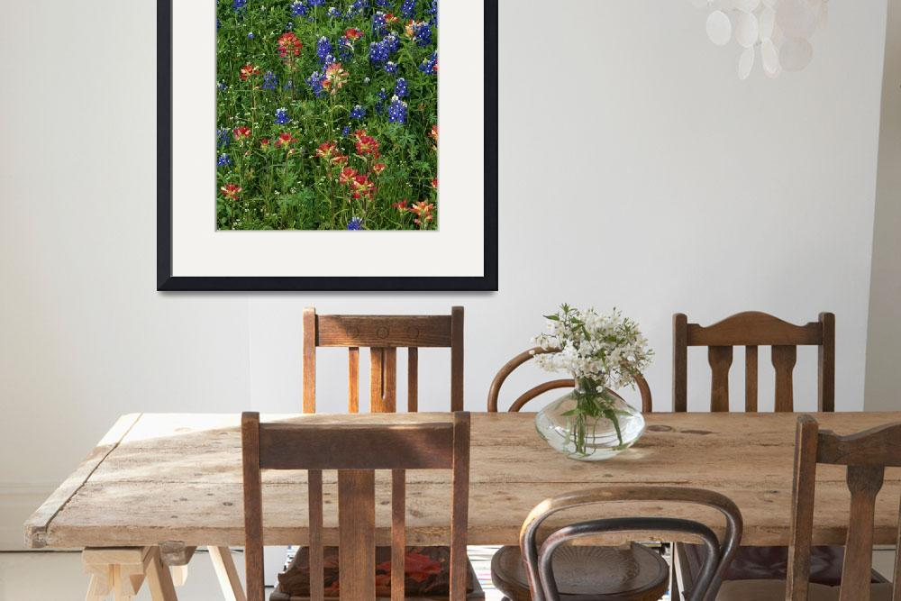 """Texas bluebonnets and indian paintbrush flowers i&quot  by Panoramic_Images"