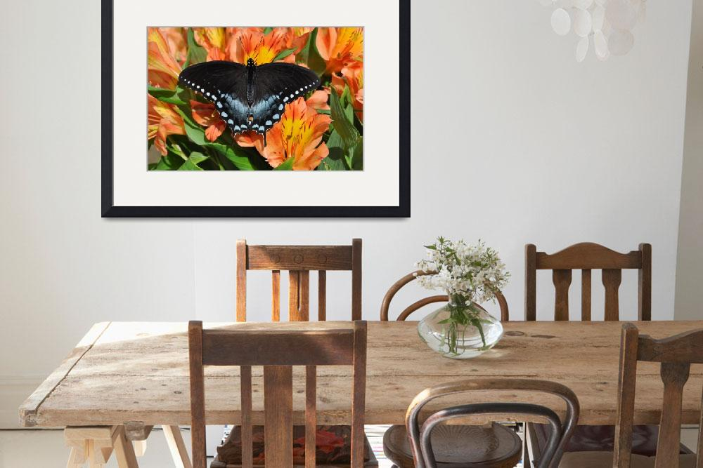 """Spicebush Swallowtail Butterfly & Alstro No2&quot  (2011) by evansonart"