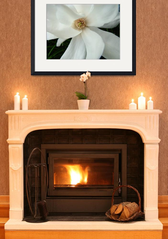 """Spring Magnolia Flower White Magnolia Tree Art&quot  (2009) by BasleeTroutman"